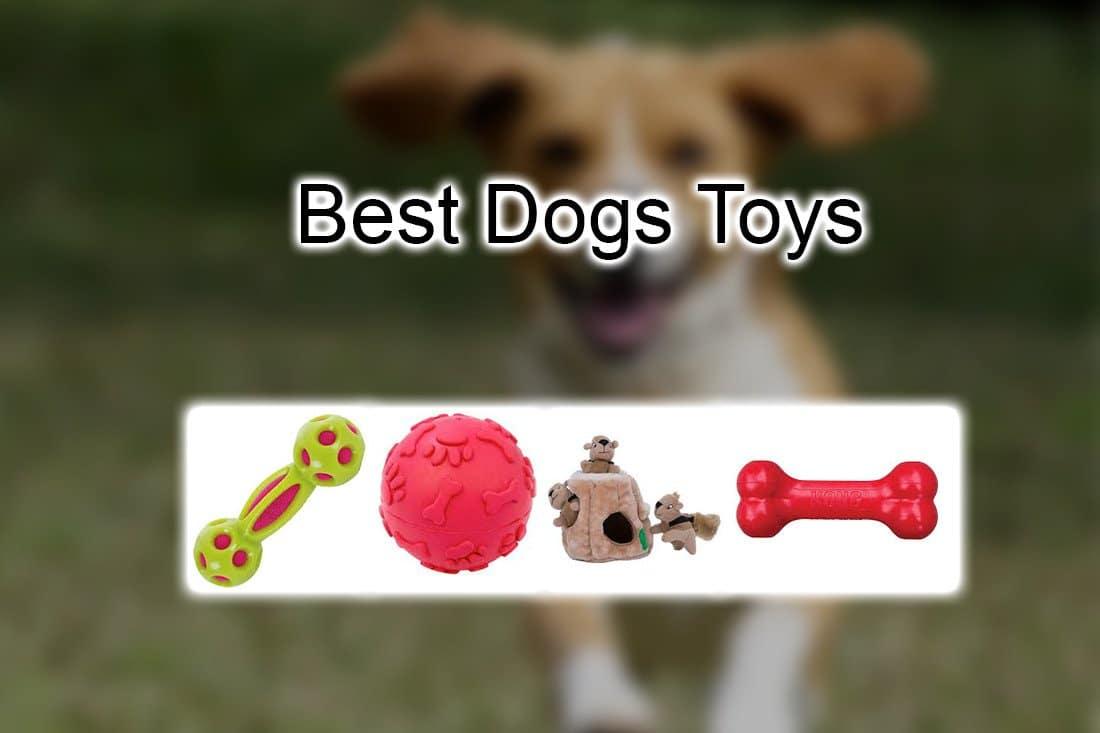 10 Best Dog Toys Pet Lover Blog