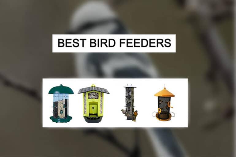 Best Bird Feeder Pet Lover Blog