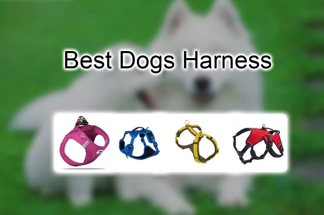 Best Dog Harness Pet Lover Blog