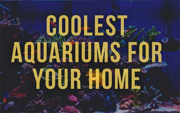 Coolest Aquariums for Your Home