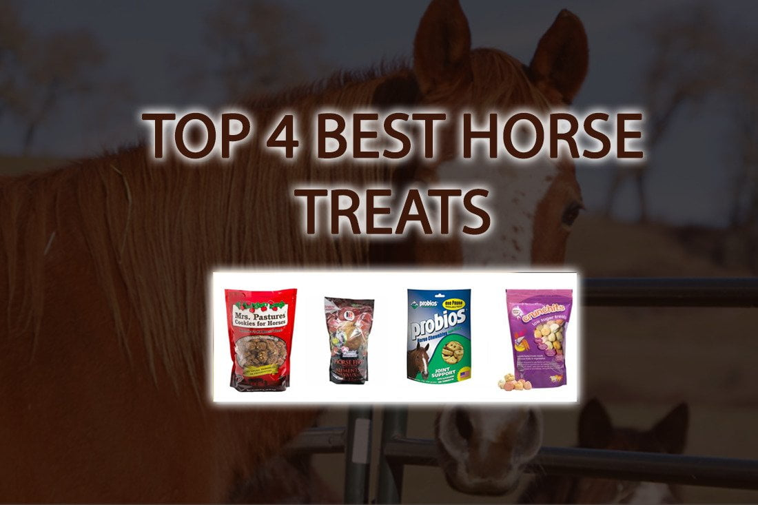 top 4 Best Horse Treats Pet Lover Blog for your horse