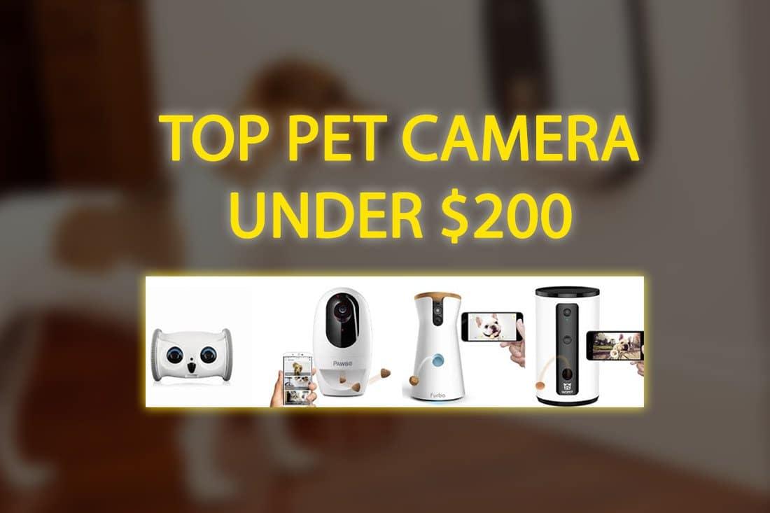 top 6 Best Pet Camera with Phone App Pet Lover Blog pet experts