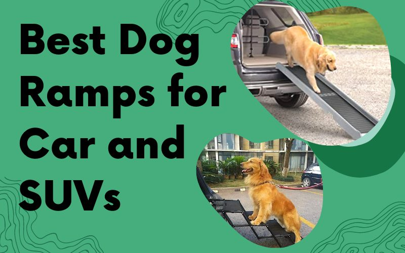Best Dog Ramps for Car and SUVs