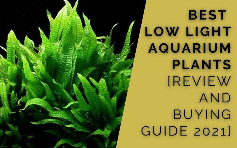 Best Low Light Aquarium Plants