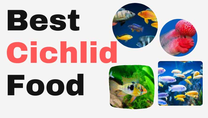 Best Cichlid Food