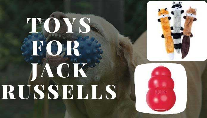 Toys for Jack Russells